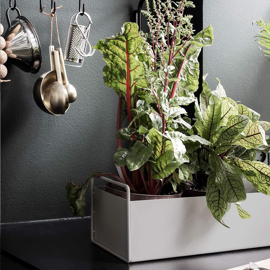 תיבה PLANT BOX