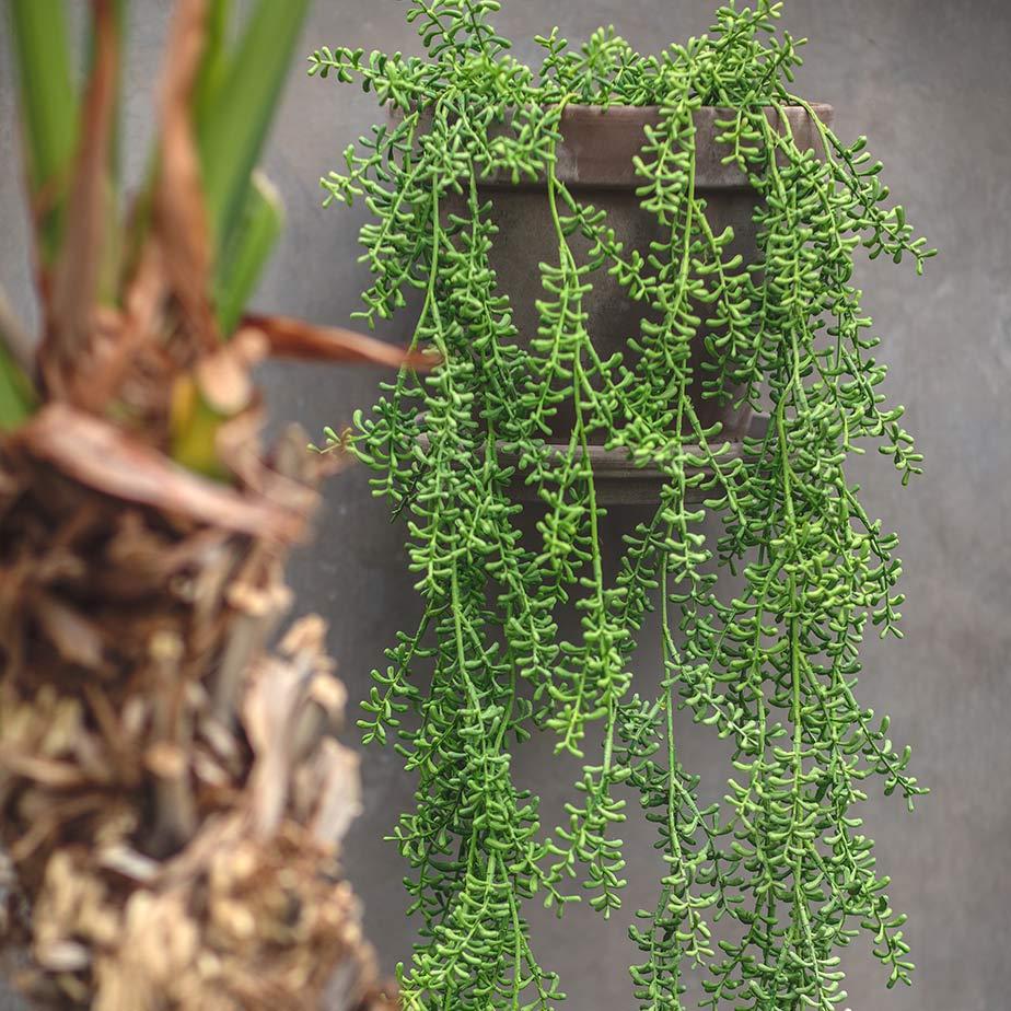 צמח מלאכותי נשפך