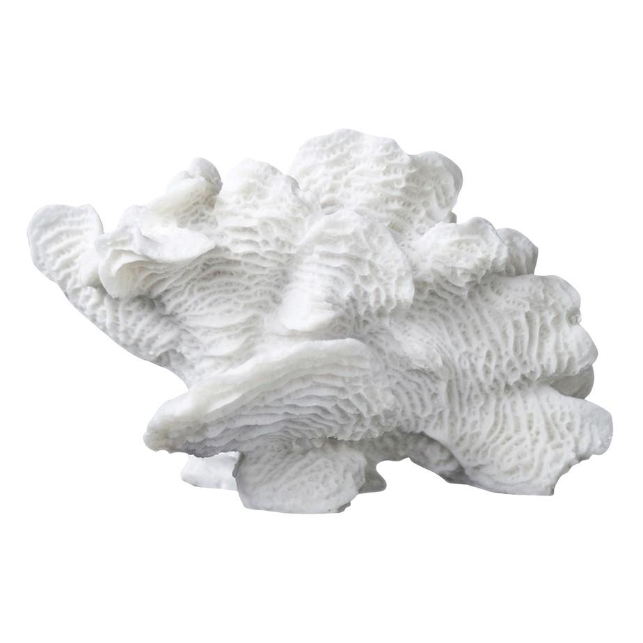 אלמוג מניפה לבן